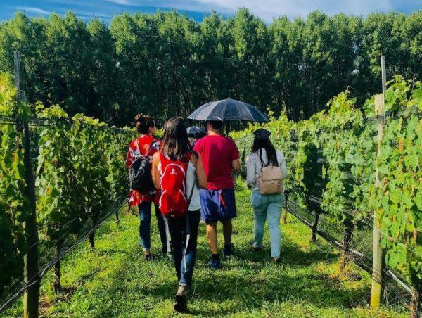Wine-Tour-Viñedo-Atos-Pampa-Calamuchita-Córdoba