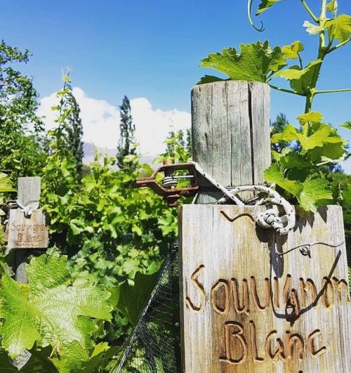 Bodega-San-Ramom-Traslasierra-Córdoba-Wine-Tour