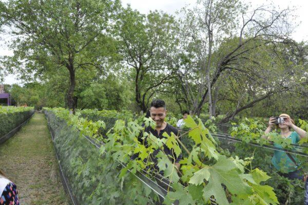 Wine Tour Traslasierra 2019 _ 1