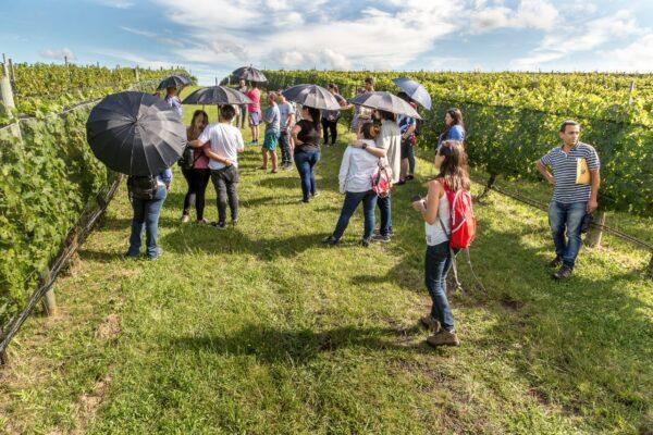 Wine Tour Calamuchita